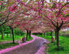 Spring Walking - 5D Diamond Painting Kit