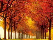 Pathway to Autumn - 5D Diamond Painting Kit