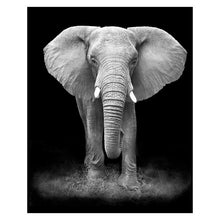 Black & White Elephant - 5D Diamond Painting Kit