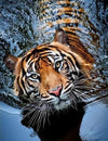 Swimming Tiger - 5D Diamond Painting Kit