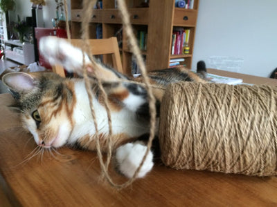 Cats and Rope...
