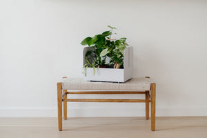 Maki Basket from OYOY with plants on wooden bench
