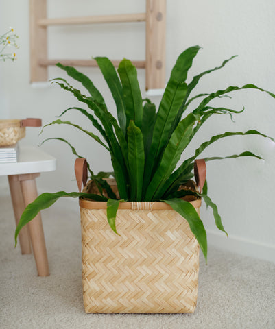 oyoy Sporta Square basket with plant
