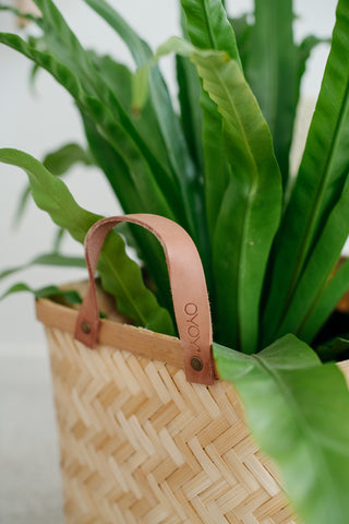 Close up of oyoy Sporta Square basket with plant