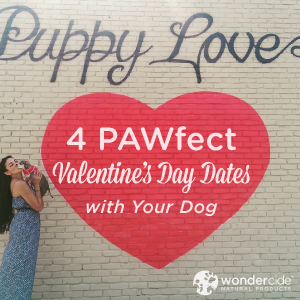 Four PAWfect Valentine's Day Dates with your Dog