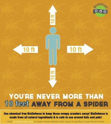 3 Tips How to Keep Spiders Away