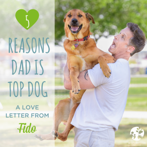 5 Reasons Dad is Top Dog