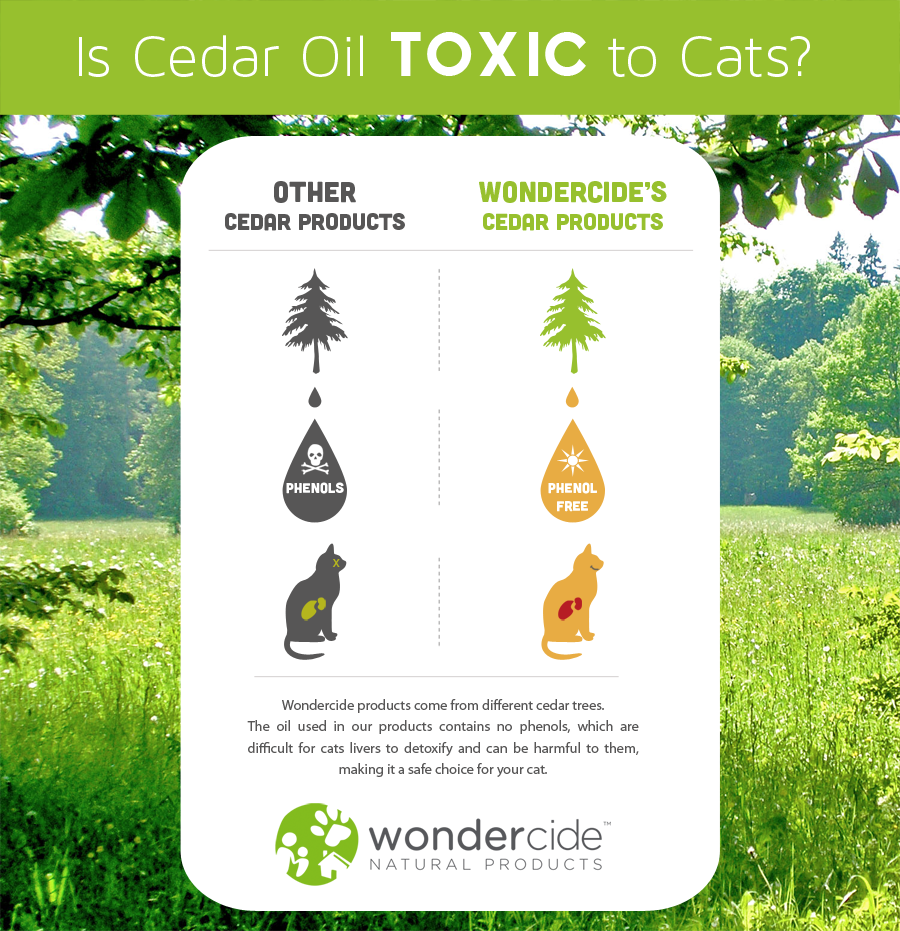 Is Cedar Oil Toxic to Cats
