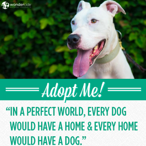 Adopt-A-Dog Month | Rusty Sledge | Austin Pets Alive!