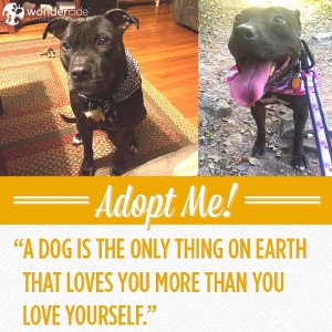Adopt-A-Dog Month | Gidgett | Love-A-Bull
