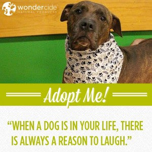 Adopt-A-Dog Month   Brodie   Austin Pets Alive!