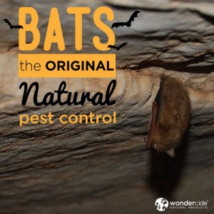 bats-original-natural-pest-control