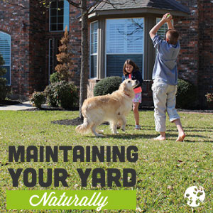 maintaining-your-lawn