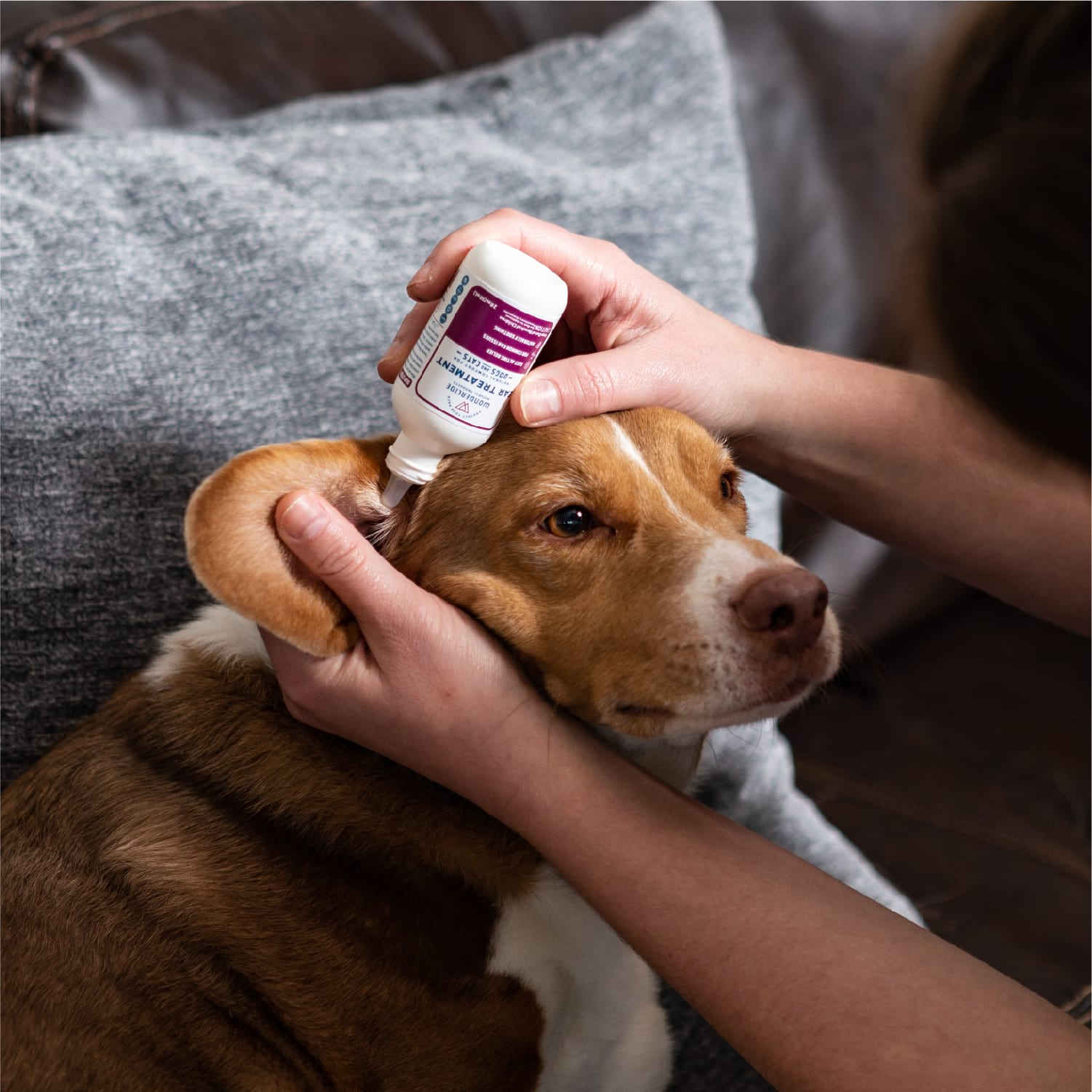 Ear Wash and Treatment Kit for Dogs and Cats - In Use
