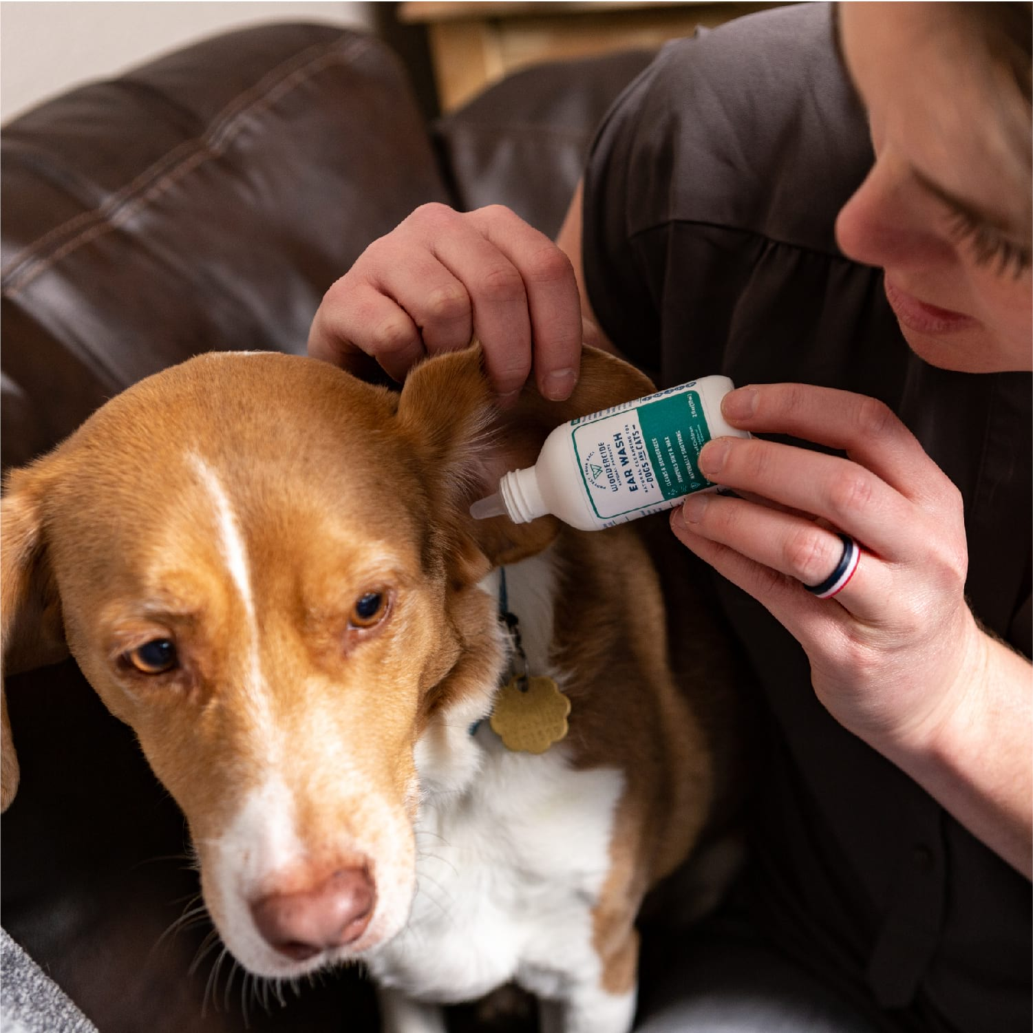 Deodorizing Ear Wash for Dogs and Cats - In Use