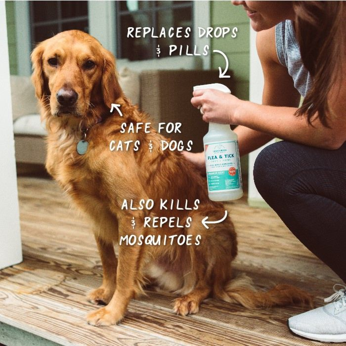 Cedarwood Flea & Tick Spray for Pets + Home - In Use