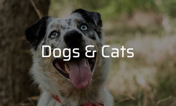 We protect Dogs and Cats