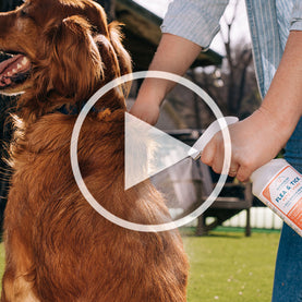 How to use Flea and Tick Spray