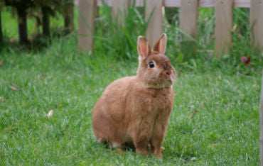 Caring For Rabbits Image One