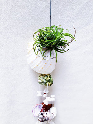 AIRPLANT + SHELLS WINDCHIME