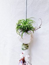 Load image into Gallery viewer, AIRPLANT + SHELLS WINDCHIME