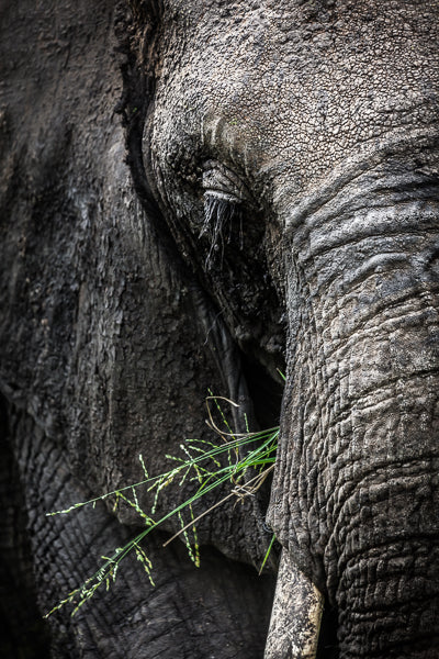 Close up image of the wonderful skin texture of an African Elephant