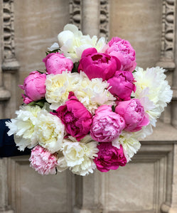 Our pick of the peonies - large bundle