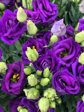 Load image into Gallery viewer, Purple lisianthus