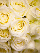 Load image into Gallery viewer, Pure Love White Roses