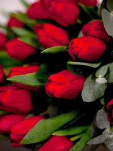 Everlasting Love Red Tulips