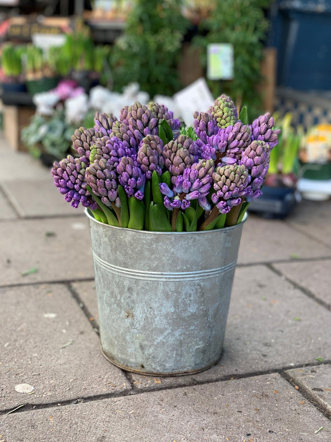Our pick of the hyacinths