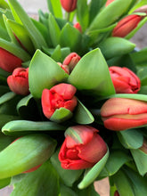 Load image into Gallery viewer, Red tulips