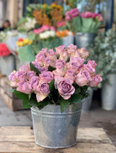 Load image into Gallery viewer, Short lilac roses