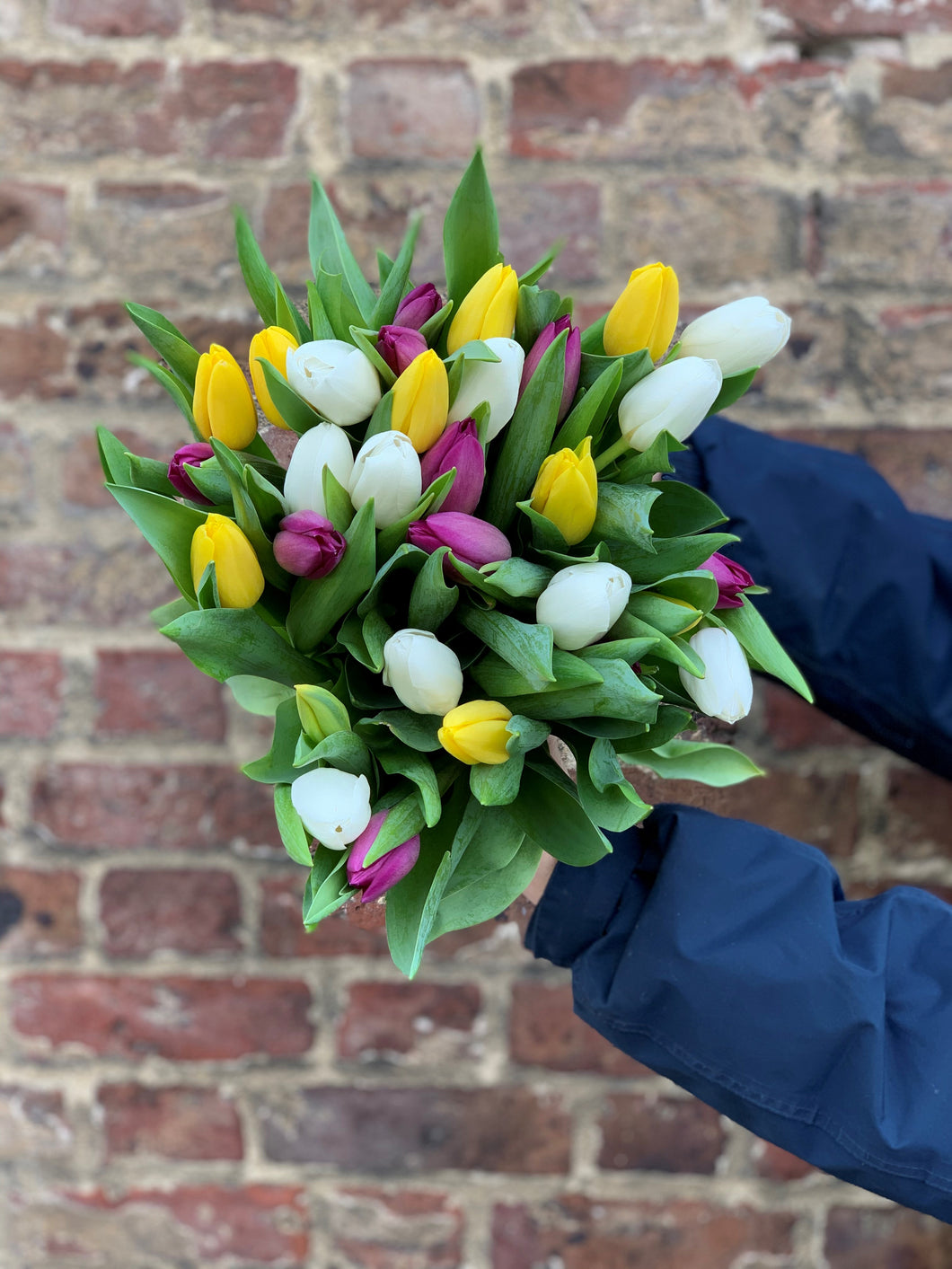 Our pick of the Tulips