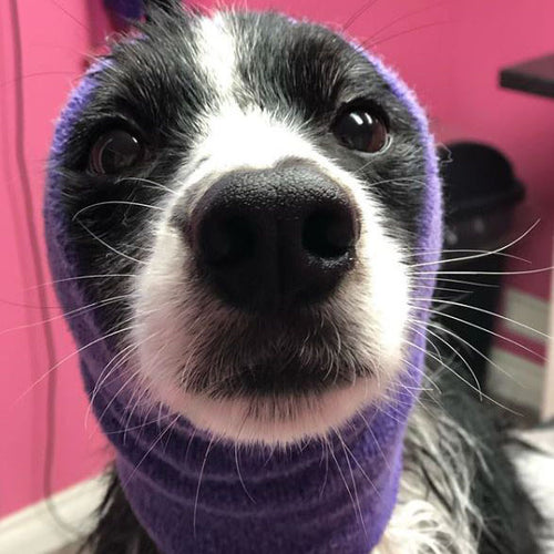 Happy Hoodie Dog Snood - Large - Purple