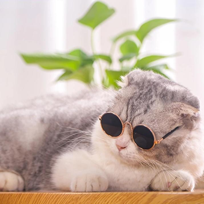 Instakitty Pet Sunglasses