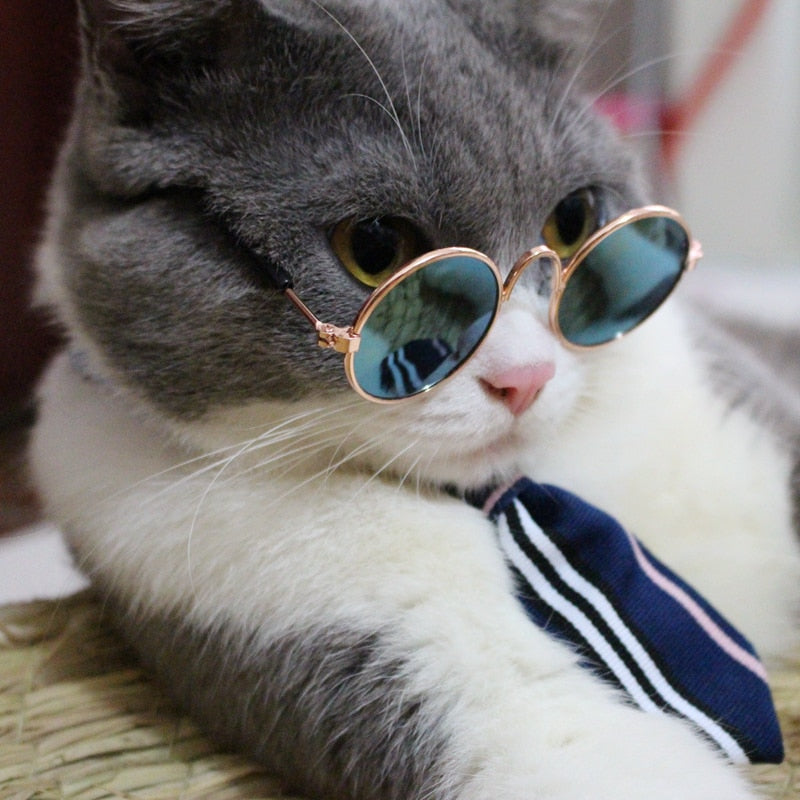 Serious Business Cat Tie and Glasses