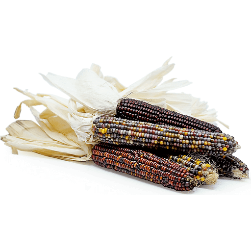 Indian Corn (Each)