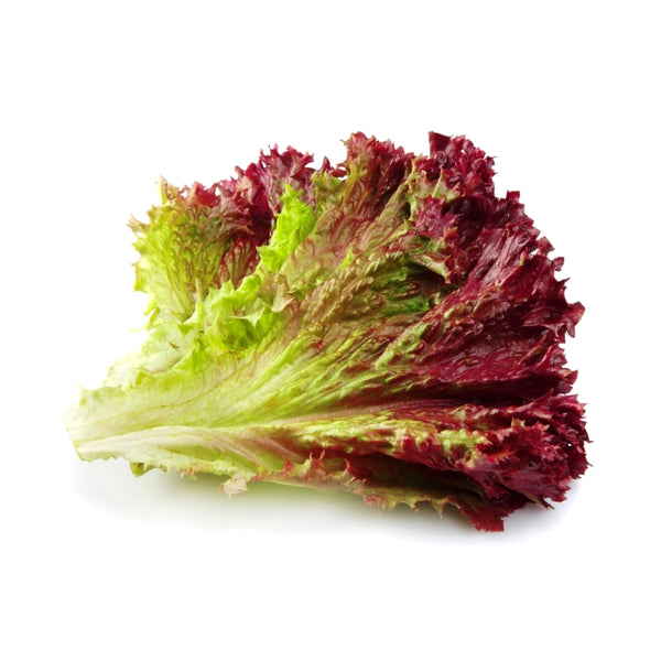 Red Leaf Lettuce (each)