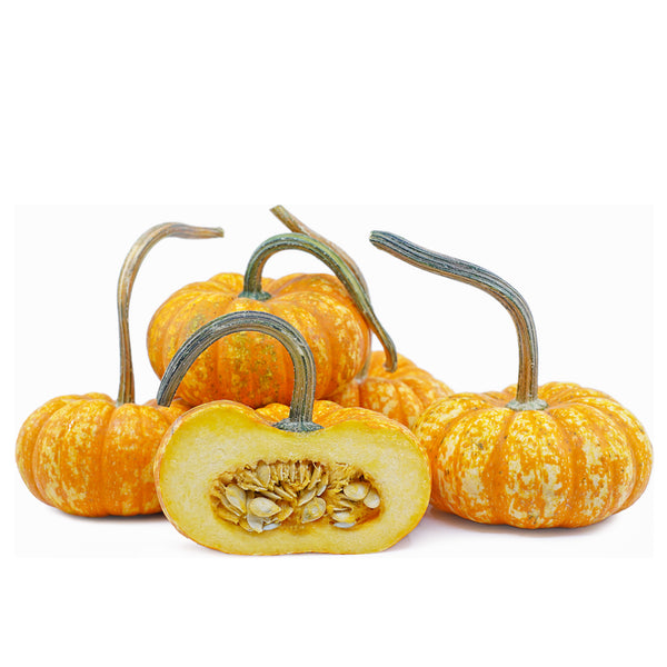 Stem Sparkler Pumpkins (each)