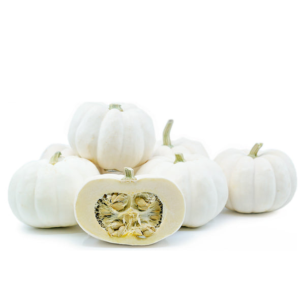 Mini White Pumpkins (each)
