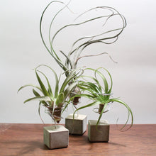 Load image into Gallery viewer, Handcrafted Air Plant Holder