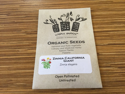 Zinnia California Giant organic seeds Urban Harvest