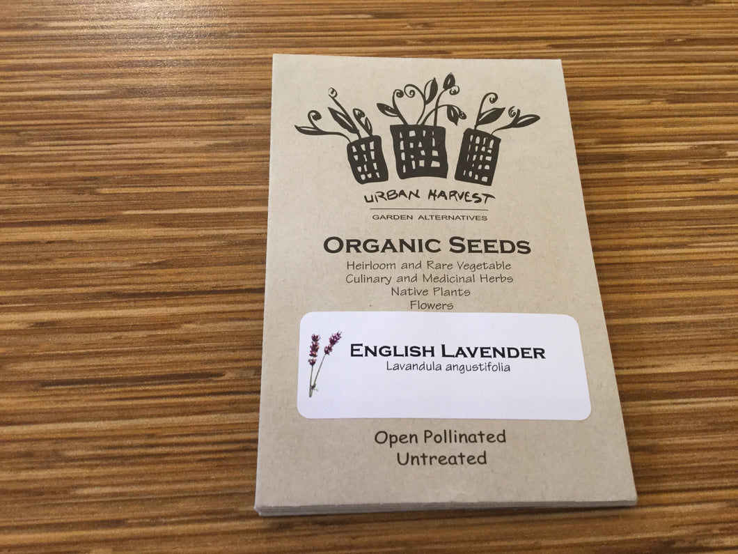 English Lavender organic seeds Urban Harvest
