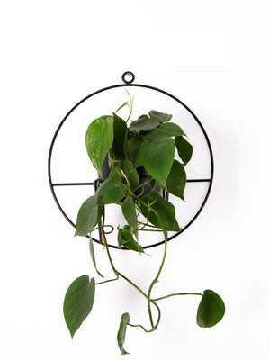 Luno Wall Plant Holder White