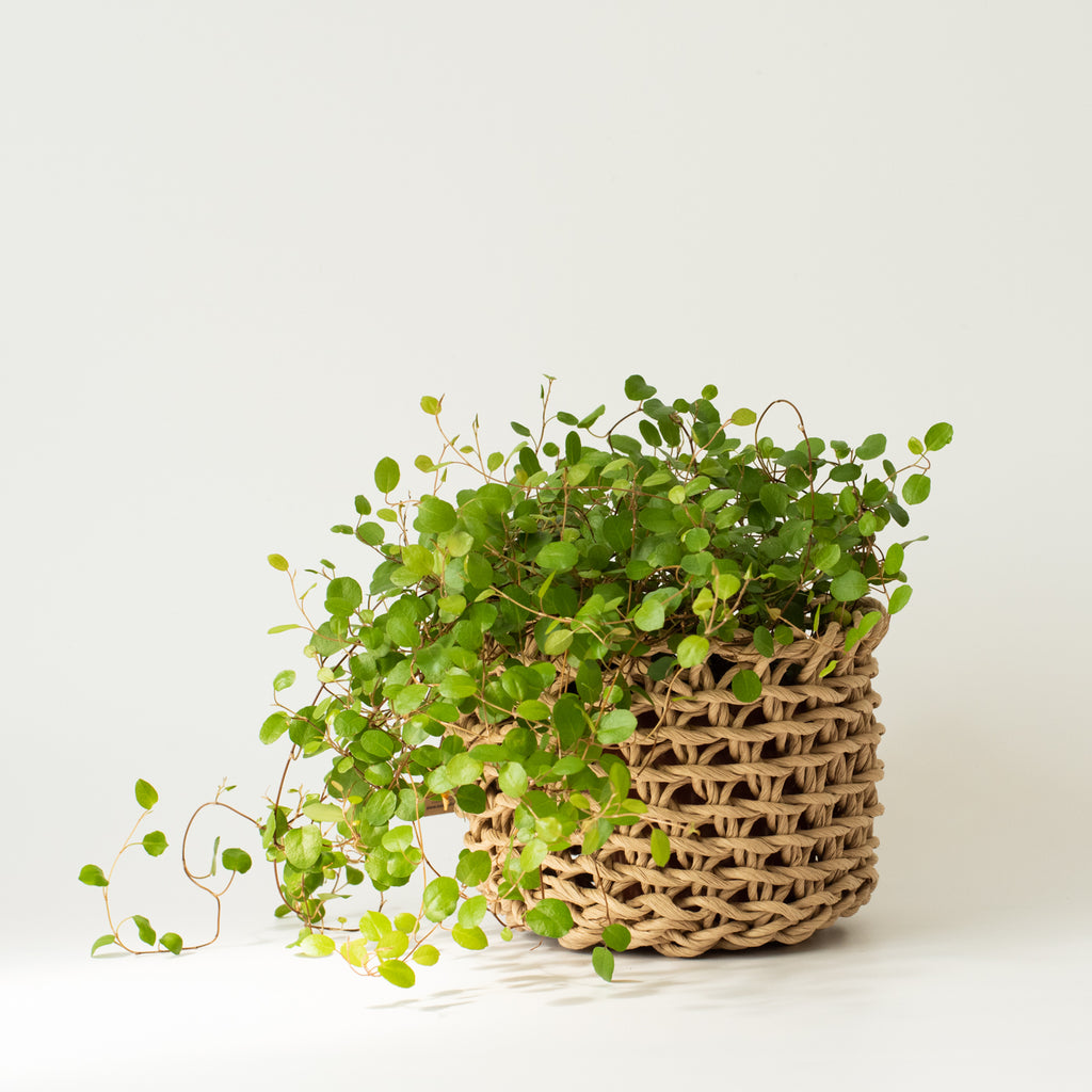 Natural Paper Basket Small