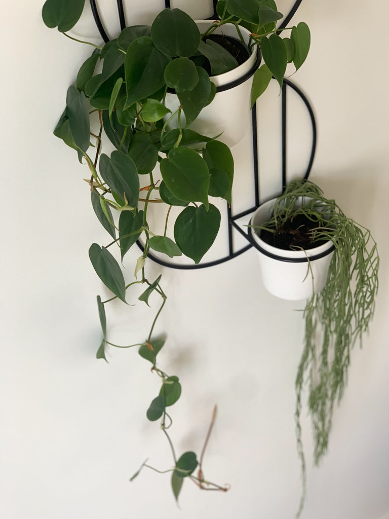 Billie Wall Plant Holder