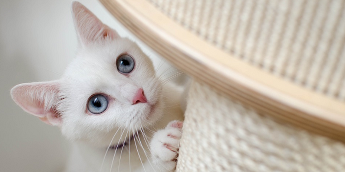 Ten Principles to Prepare Cat Scratchers