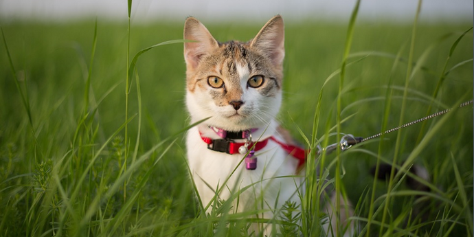 How to Prevent Losting Cats and Dogs