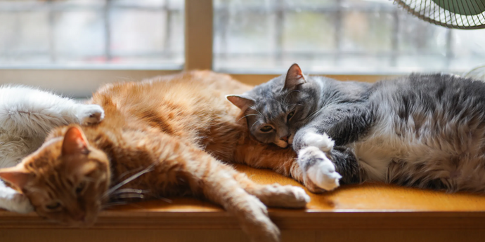 Cat Summer Tips: Help Your Cat Beat the Heat This Summer!